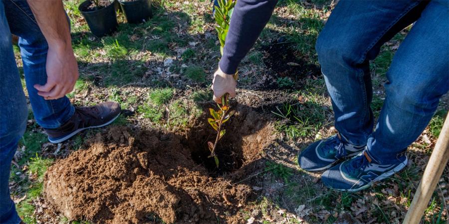 Universidade do Minho plantou 450 árvores para diminuir pegada carbónica