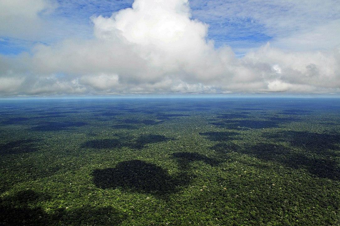 Um quarto de terras públicas da Amazónia brasileira tem registo ...